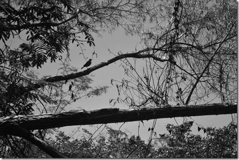 na-trilha-do-arado-velho-foto-de-felipe-farias8